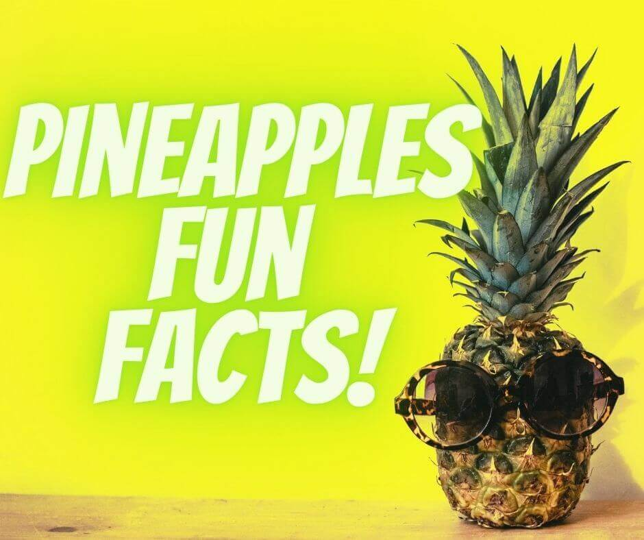 Pineapples Fun Facts