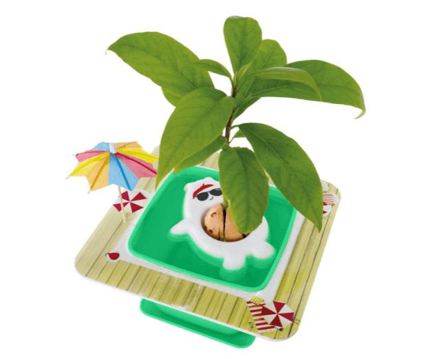 Cute Avocado Tree Growing Kit with Pot