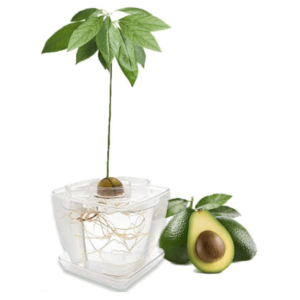 Kitchen Tools and Gadgets for Avocado Tree Growing Kit